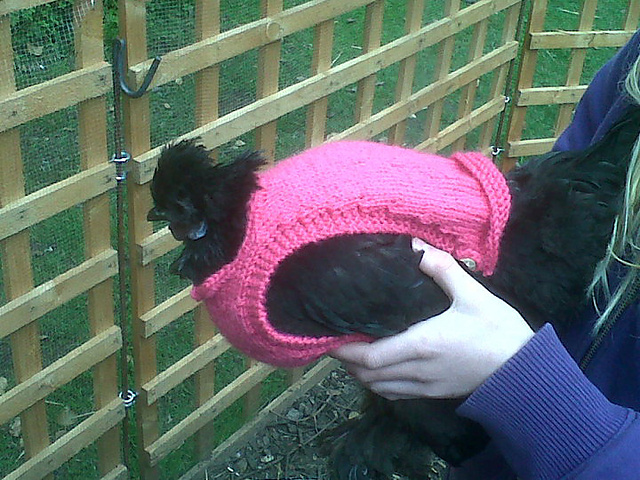 Knitting Pattern Hen Jumpers : What NOT to Knit: Crazy Pet Knitting