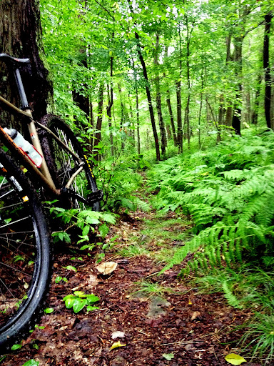 White Tail Trail Laurel Highlands