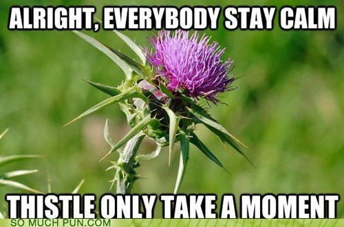photo of a thistle plant...don't worry, thistle only take a minute