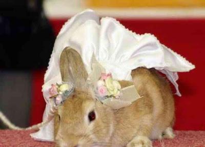 foto hewan lucu kelinci imut