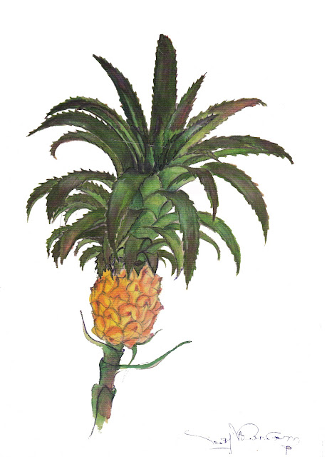 Water color of Pineapple flower