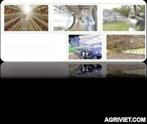 Agriviet.Com-Picture6.jpg