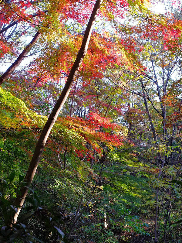 metsäpuut