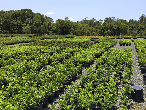 Downes Whole Nursery Northern Rivers