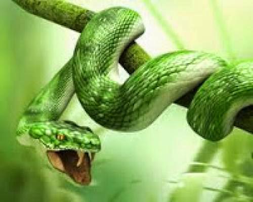 Snake Safety Spells
