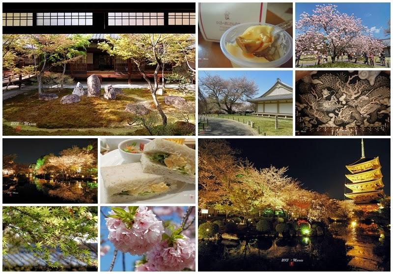 京都 2013 櫻花見
