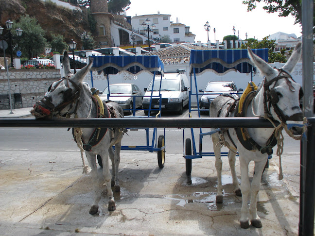 Donkey taxis in Mijas, Costa del Sol in Andalucia