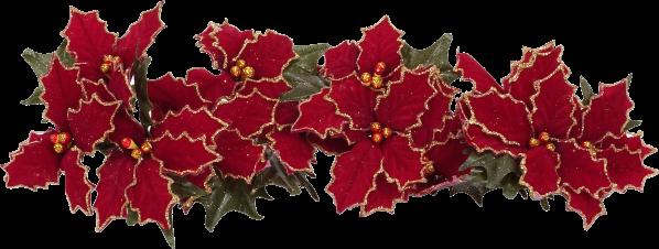 lindas flores de natal