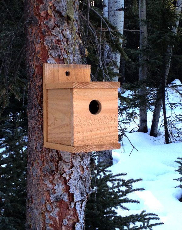 Ana White Kids Kit Project 1 Modern Birdhouse Diy