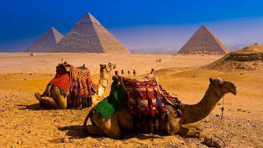 Camels, Great Pyramids of Giza, Egypt.jpg