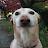 Tyler Fulcher avatar image