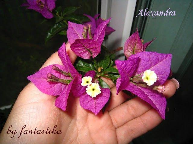 Красота без границ - Страница 9 Alexandra