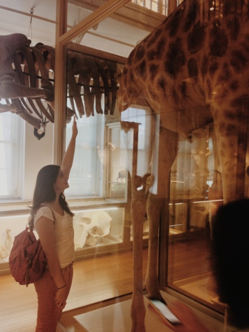Harvard Museum of Natural History, Giraffe