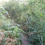 Track through ferns Riverside walk (54803)