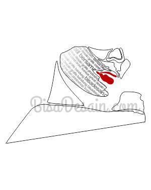 11. Membuat Tipografi Wajah dengan Corel Draw