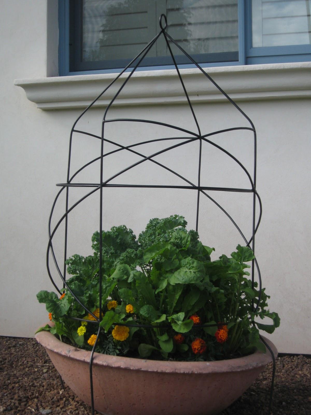 Sweet Life Garden Gardening Up In A Wine Barrel