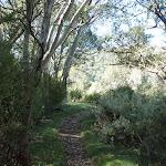 Merrits Nature Track near bob sled (275015)