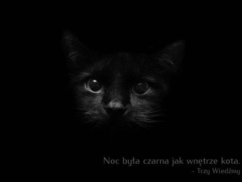 noc była czarna jak wnętrze kota