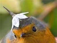Imágenes Aves divertidas o curiosas
