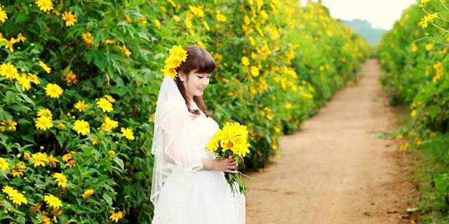 Những bài thơ Hoa Dã Quỳ hay, tình thơ hoa cúc quỳ thật đẹp