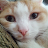 Nagy Jozsef avatar image