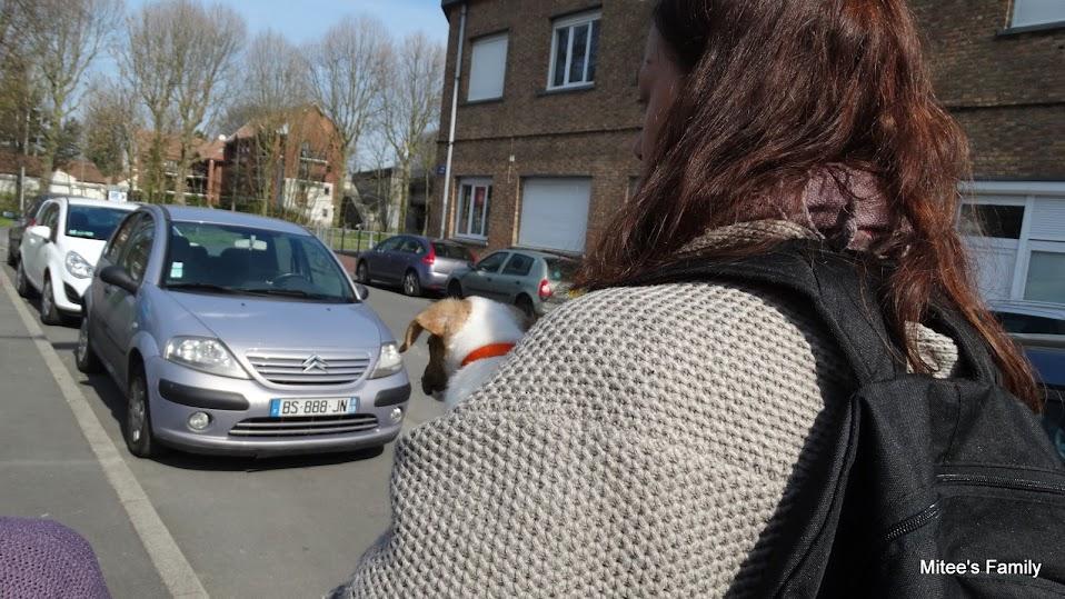 Balades canines en Nord (59)/Pas de Calais (62) - Boulogne-sur-Mer, Calais et Lille - Page 4 DSC01790