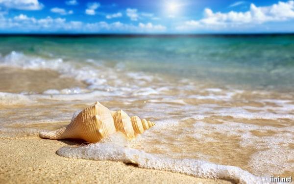ảnh vỏ ốc trên bãi biển