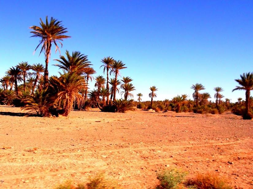 marrocos - Marrocos e Mauritãnia a Queimar Pneu e Gasolina - Página 10 DSCF1251