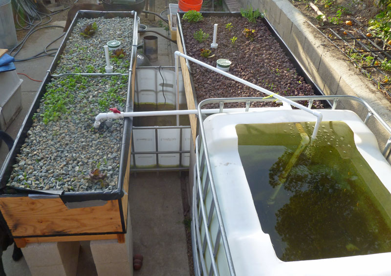 Aquaponics Pond System Design