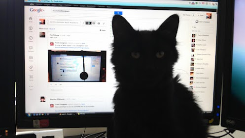 cat #whitespace google plus