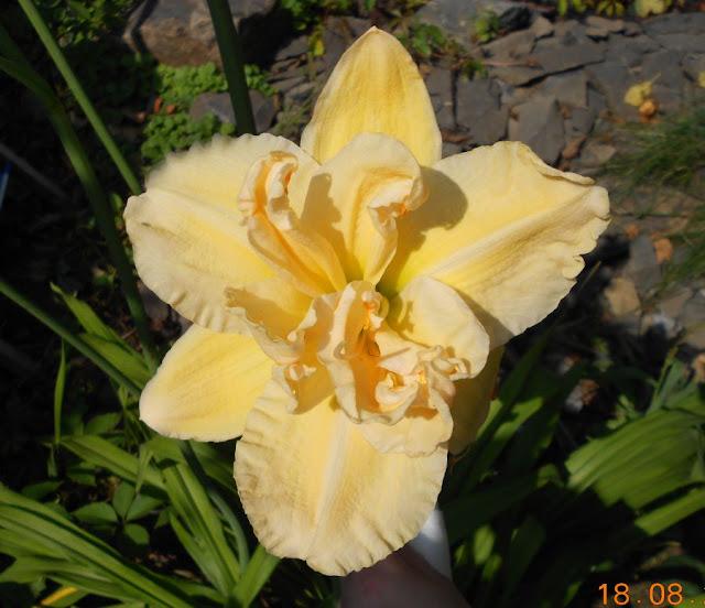 Садово-огородный дизайн  - Страница 4 DSCN0577