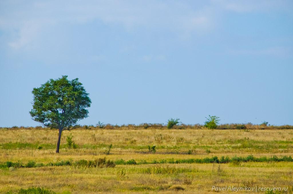 Дерево в степи