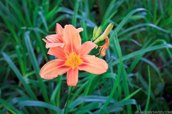 bunga taman genting