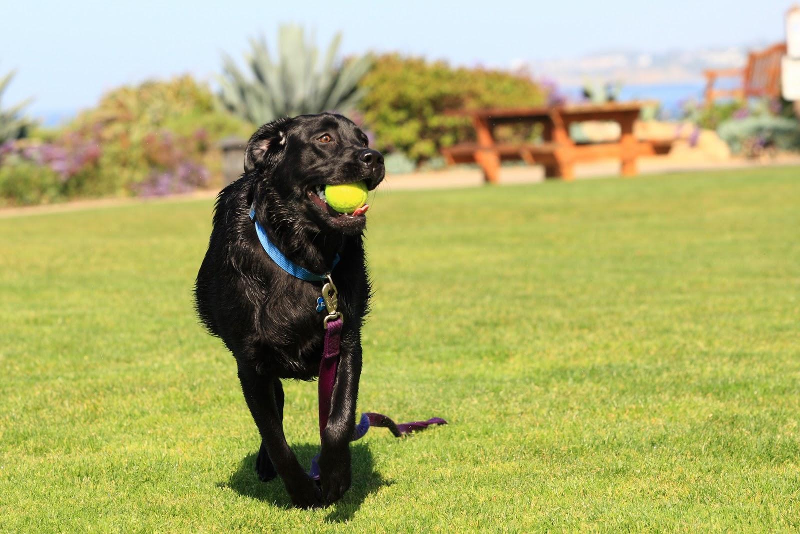 Els Dog Training