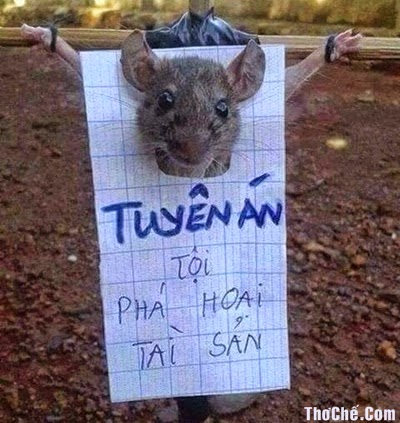 Thơ Chế Vui Xử Án Chuột Phá Hoại