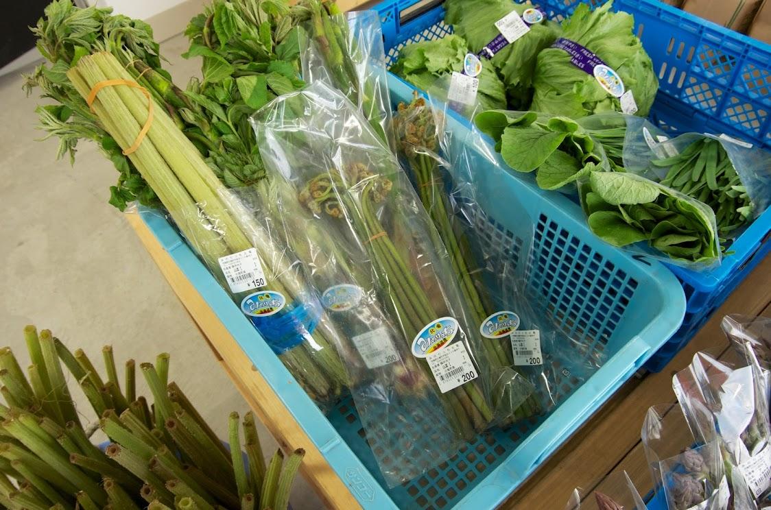北竜町の大地が育てた山菜たち