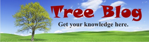 Arborist Blog About Trees