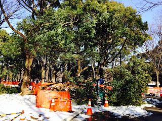 Yoyogi park Snow