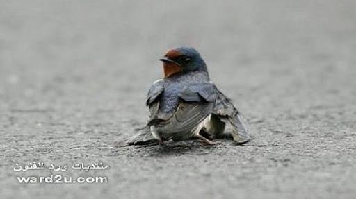 صور معبره عن احزان الطيور والحيوانات