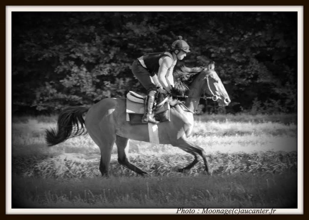 Photos Maisons-Laffitte entrainement 31-07-2014 IMG_2544