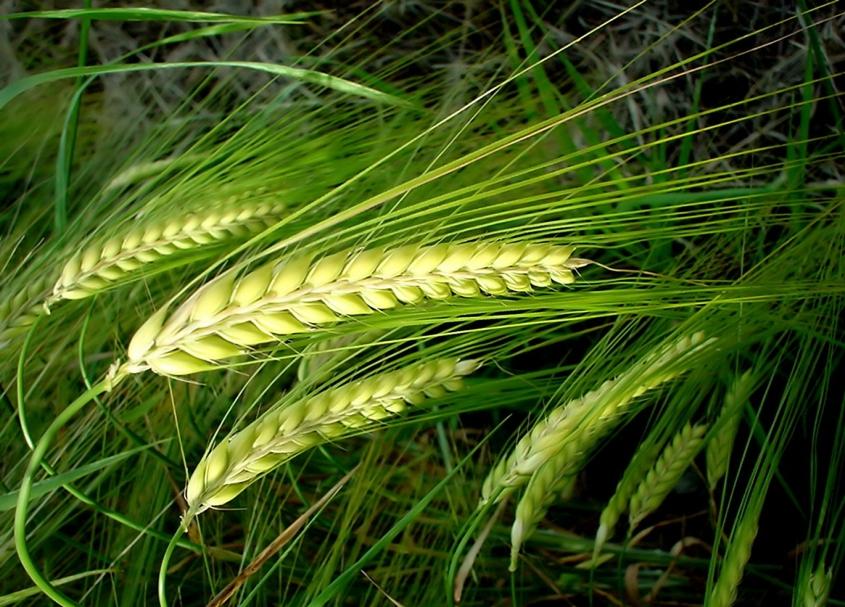 Как повысить урожайность сельхозкультур: эффективные способы
