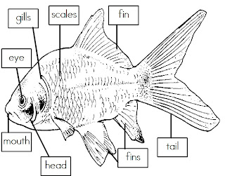 Worksheets Labeling Of Of A Fish Body mrs is class label the parts of a fish freebie freebie