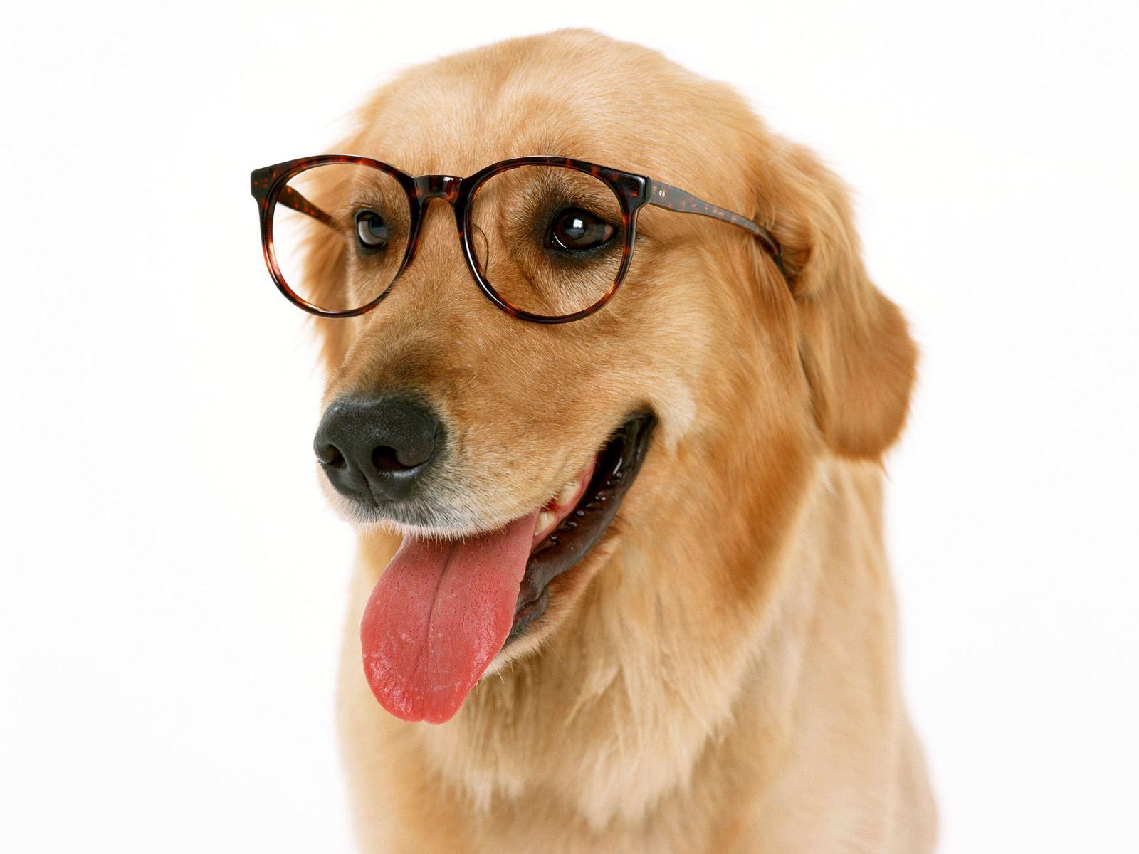 Traduction anglais-français: Pour chiens savants ou