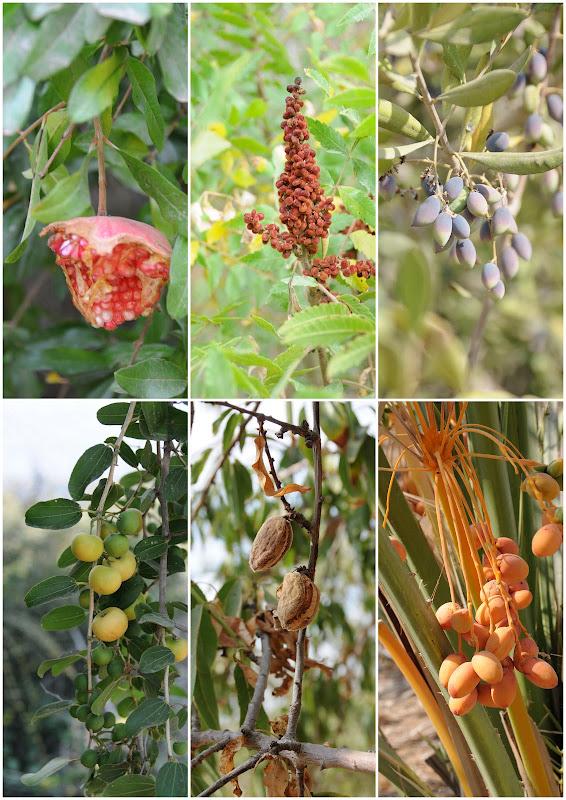 plants of Israel, Israel Trail