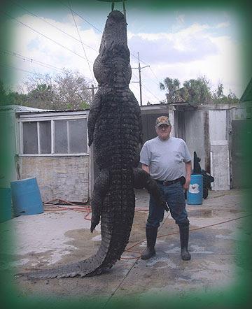 Questões e Fatos sobre Crocodilianos gigantes: Transferência de debate da comunidade Conflitos Selvagens.  - Página 3 Alligator-big-home-page