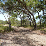 Tree next to trail on the Wallarah Pennisula (388598)