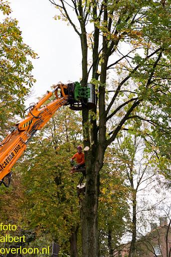 Bomen gekapt Museumlaan in overloon 20-10-2014 (16).jpg