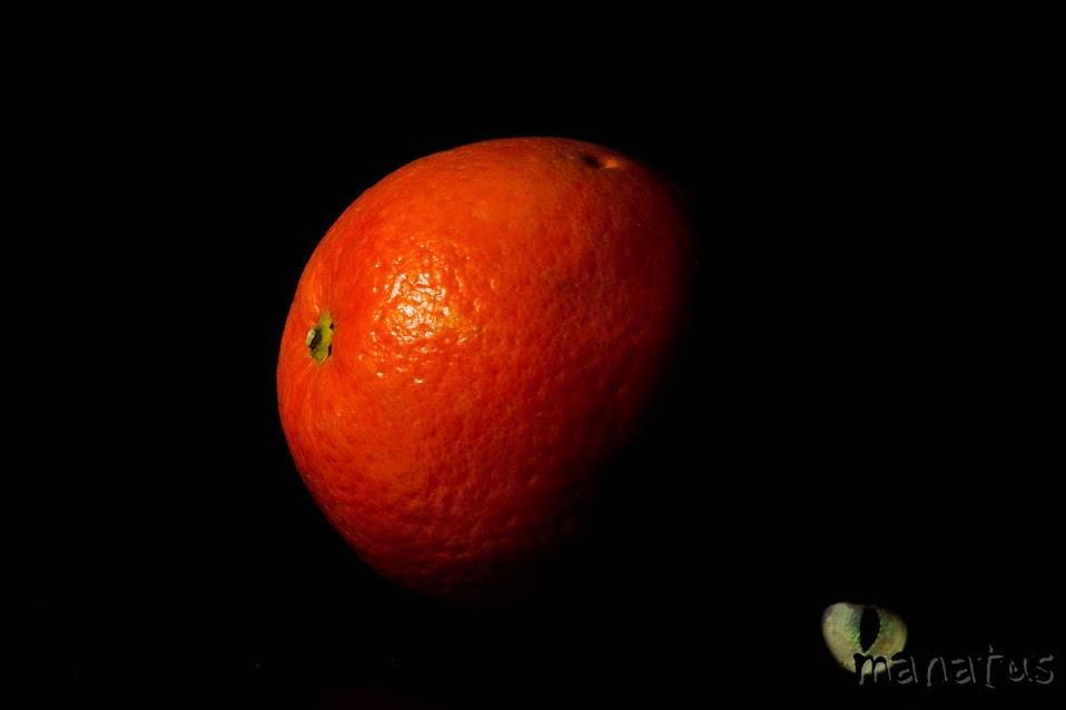 manatus foto blog naranja