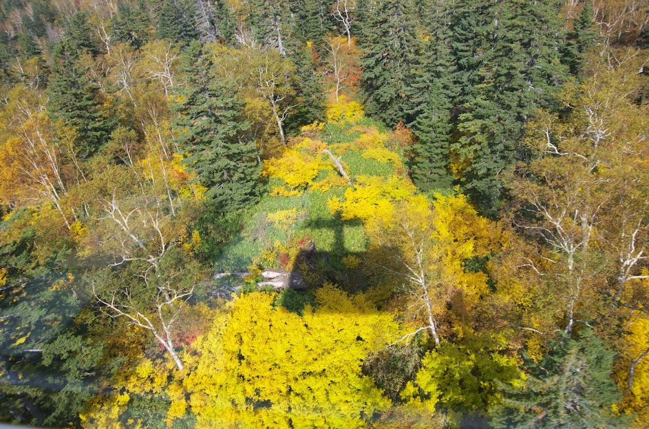 黄葉の中のロープウェイ