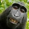 Avatar of Dominic Burrows